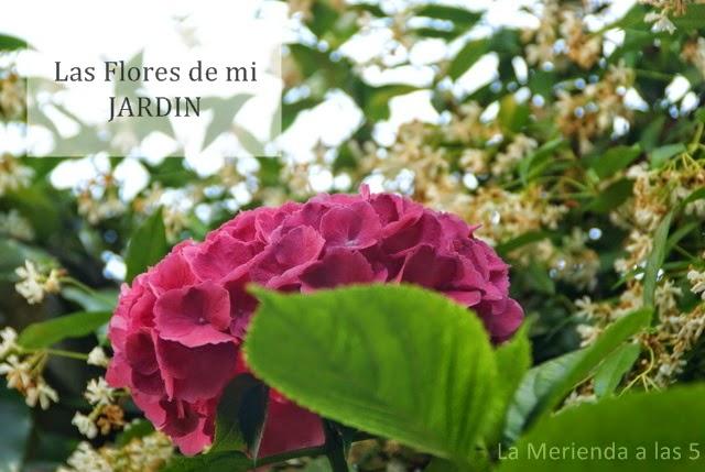 Las flores de mi jardín – La Merienda a las 5